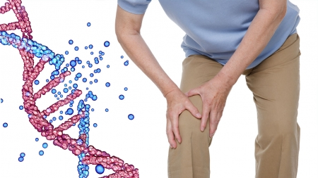 관절염 자연 치유 돕는 핵심 유전자 발견