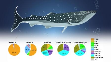 100살 사는 고래상어 게놈 분석…장수 비결 실마리