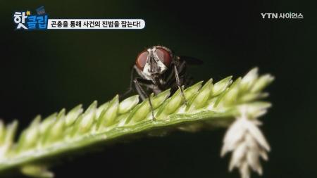곤충을 통해 사건의 진범을 잡는다!