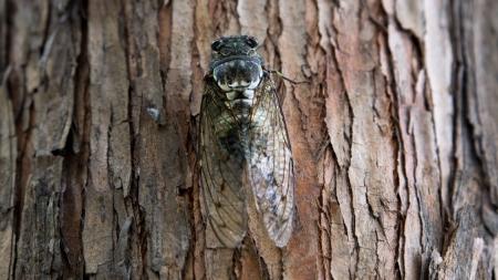 [궁금한S] 여름을 알리는 곤충 '매미' 과학적으로 살펴보기