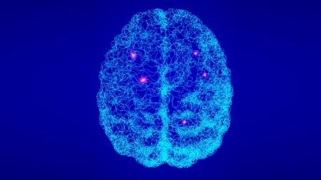 뇌 속 비신경세포가 촉감 인식 능력 높인다