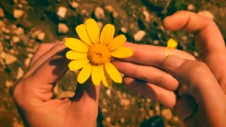 [궁금한S] 꽃가루에 숨겨진 살인의 비밀…생태학으로 사건을 해결한다