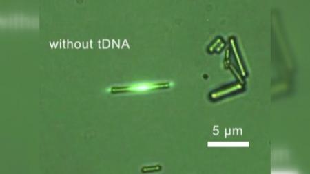 국내 연구팀, DNA 손상 없이 탐지하는 광센서 개발