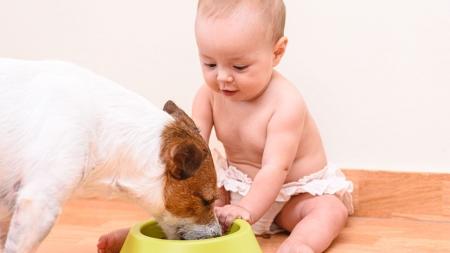 [슬기로운 펫생활] 아이와 반려동물, 같이 키울 수 있을까?