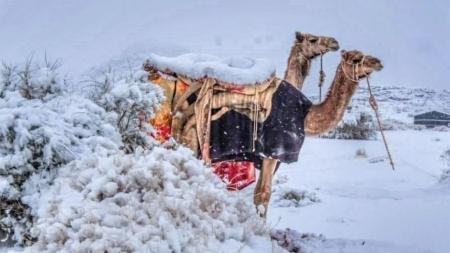눈 쌓인 사하라 사막·눈 맞는 사우디 낙타...곳곳 이상기후