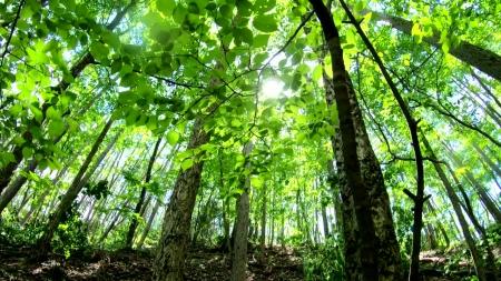 2050년까지 나무 30억 그루 심는다...탄소 3,400만 톤 저감