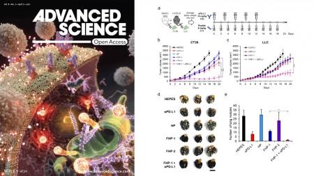 KAIST·한양대, 면역 항암제 효능 높여줄 물질 개발 이미지