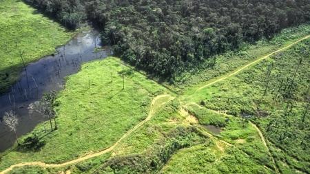 아마존, 지난 10년간 CO₂배출량이 흡수량보다 20% 많아