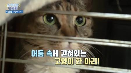 [슬기로운펫생활] 따돌림당하는 고양이 해결책은 없을까요?