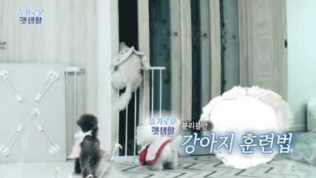 [슬기로운펫생활] '보호자 껌딱지' 분리불안 심한 강아지 훈련법