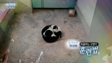 [슬기로운 펫생활] 틈만나면 탈출…고양이의 올바른 산책법은?