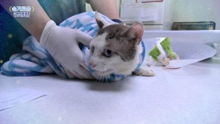 [슬기로운 펫생활] 심한 피부 상처 길고양이, 다시 건강해질 수 있을까?