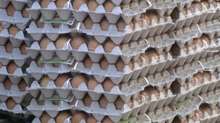반년째 '달걀과의 전쟁'...달걀값 왜 안 떨어지나