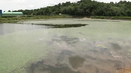 [사이언스 HOT5] 하천 수온 상승으로 어류 폐사…8월 첫째 주 과학 이슈