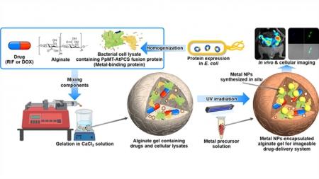 약물 위치 추적 가능한 다기능 약물 전달체 개발