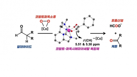 성호르몬 바뀌는 화학반응의 중간물질 최초 확인