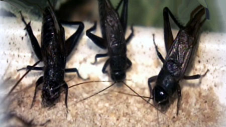 [무한상상 직업] 곤충의 비밀을 밝히는 사람들 - 곤충연구원