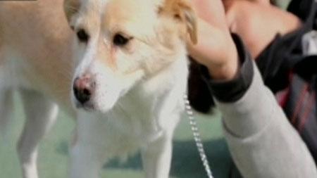 [무한상상 직업] 반려동물을 위하여 - 동물행동교정전문가