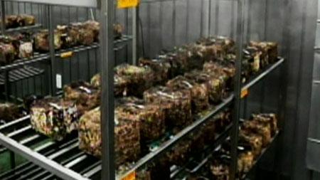 [무한상상 직업] 산림의 선물, 버섯 -국립산림과학원 버섯연구팀