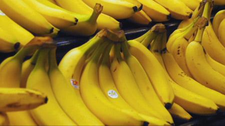 멸종비상 바나나, 해답은 유전자의 다양성?