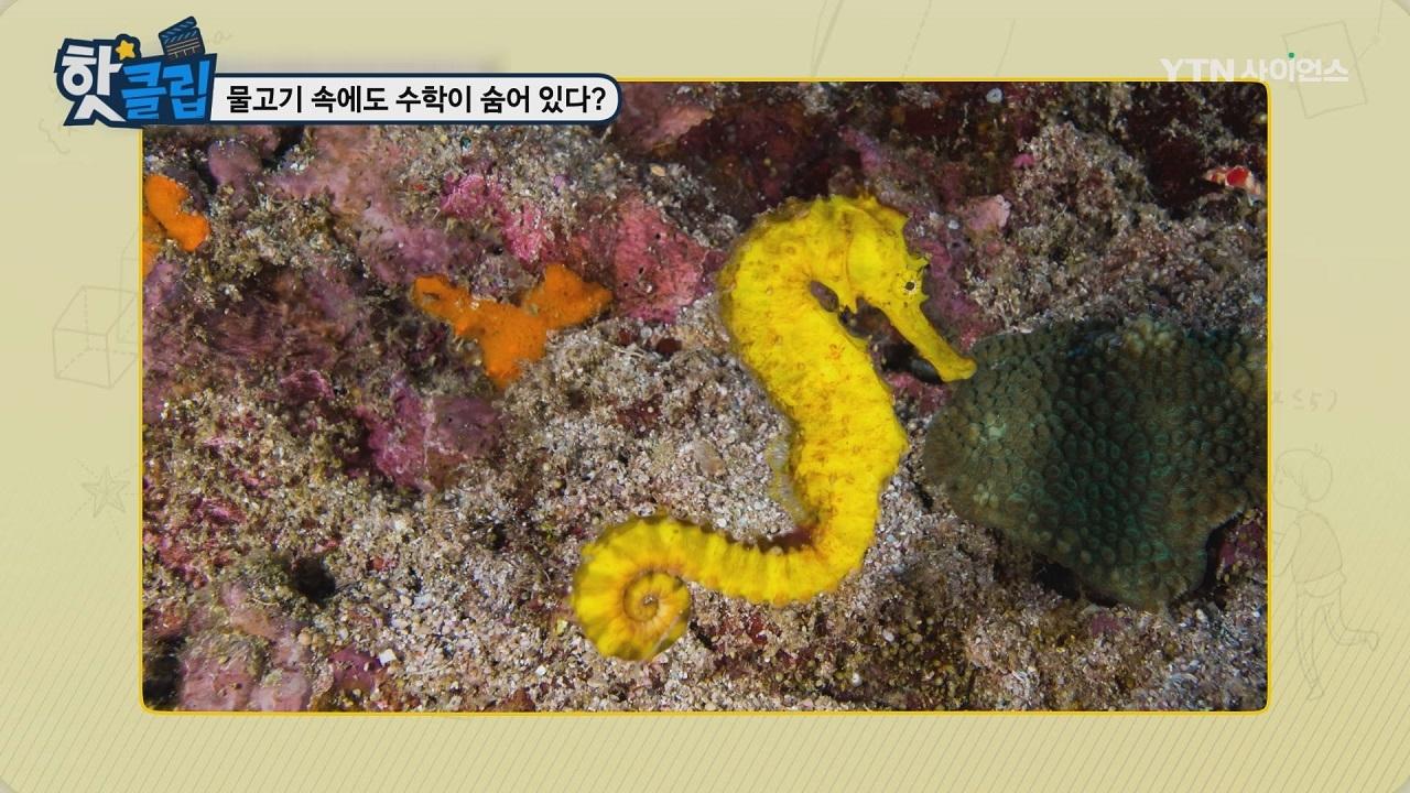 물고기 속에도 수학이 숨어 있다?