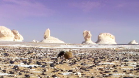 아프리카 - 칼라하리 사막