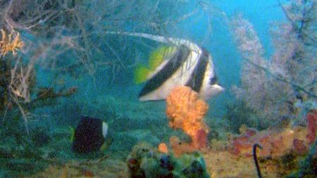 대산호초 2부. 열대우림