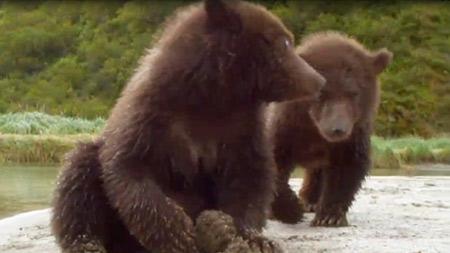 밀착취재! 알래스카 회색곰 1부