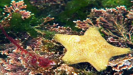 해안가 비밀생활