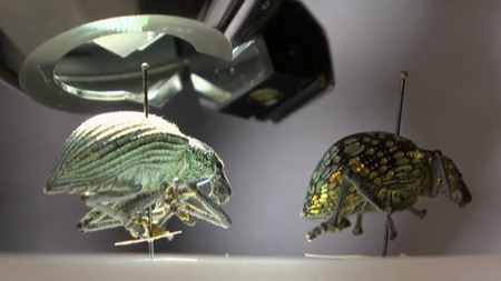곤충 해부학