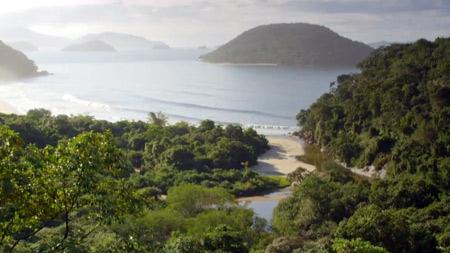 와일드 브라질 1부