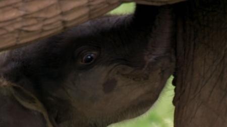 BBC특선_24/7와일드_4. 코끼리 이야기