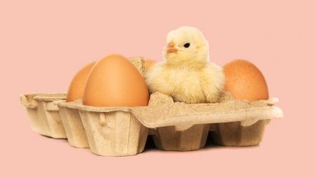 오늘 먹은 달걀, 유정란? 무정란? 간단 구별법!