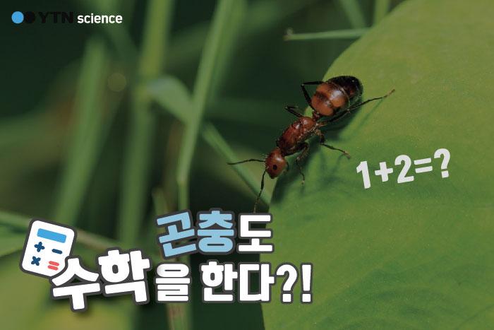 곤충도 수학을 한다?! 이미지