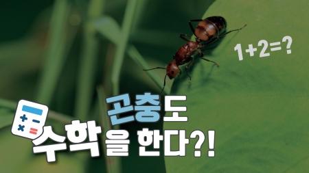 곤충도 수학을 한다?!