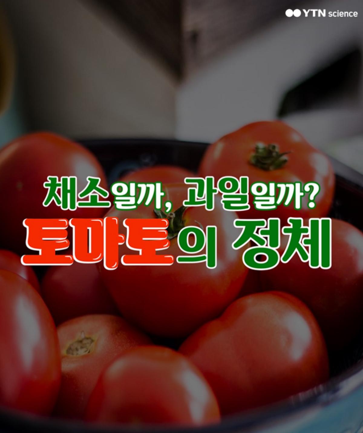 채소일까, 과일일까? 토마토의 정체 이미지