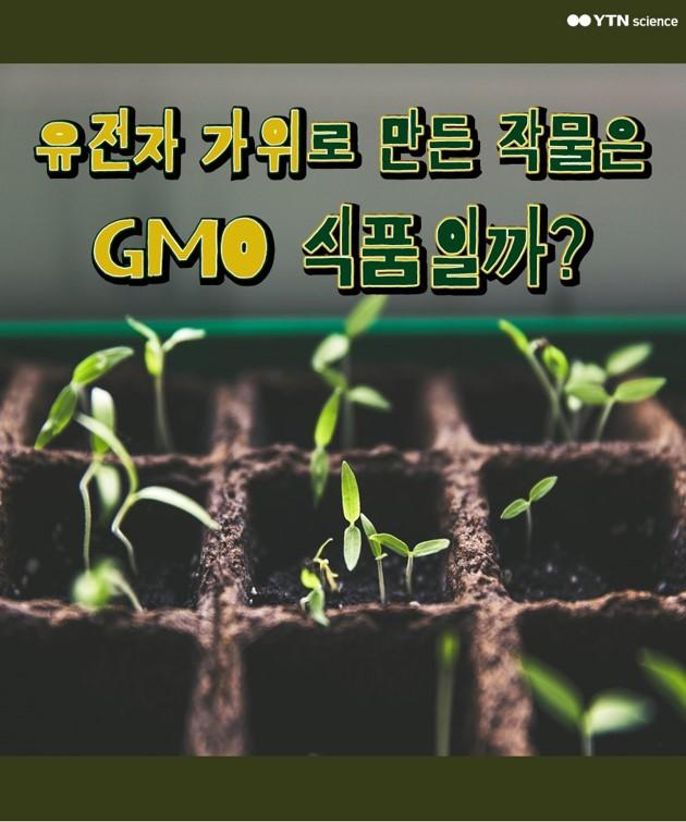유전자 가위로 만든 작물은 GMO식품일까? 이미지