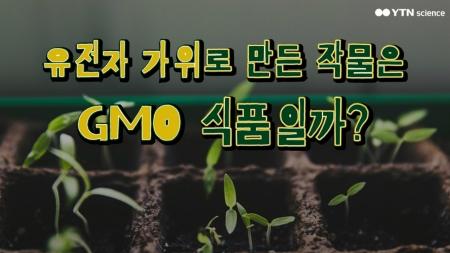 유전자 가위로 만든 작물은 GMO식품일까?