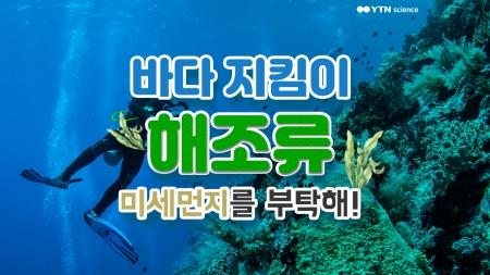 바다 지킴이 해조류…미세먼지를 부탁해!