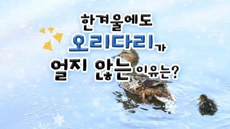 한겨울에도 오리 다리가 얼지 않는 이유는?