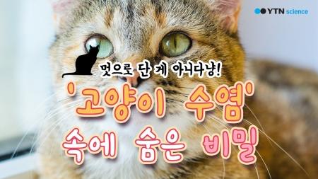 멋으로 단 게 아니다냥! '고양이 수염' 속에 숨은 비밀