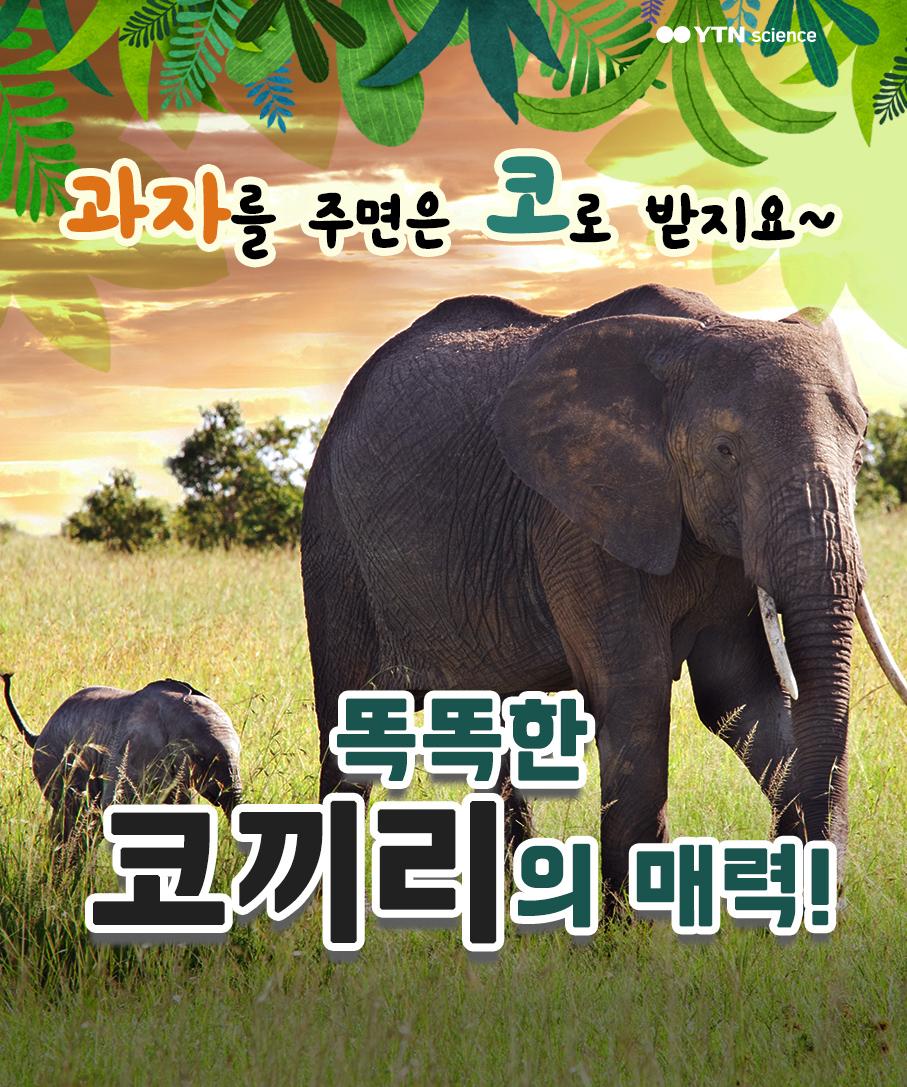 과자를 주면은 코로 받지요~ 똑똑한 코끼리의 매력! 이미지