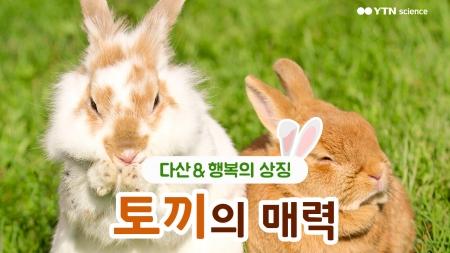 다산과 행복의 상징, '토끼'의 매력