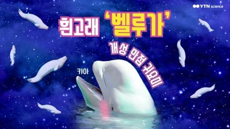 개성 만점 귀요미 흰고래 '벨루가'