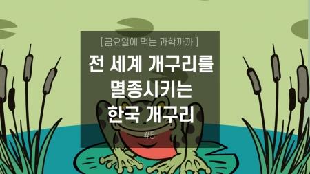 전 세계 개구리를 멸종시키는 한국 개구리?