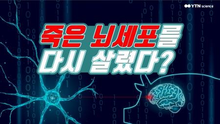 죽은 뇌세포를 다시 살렸다?