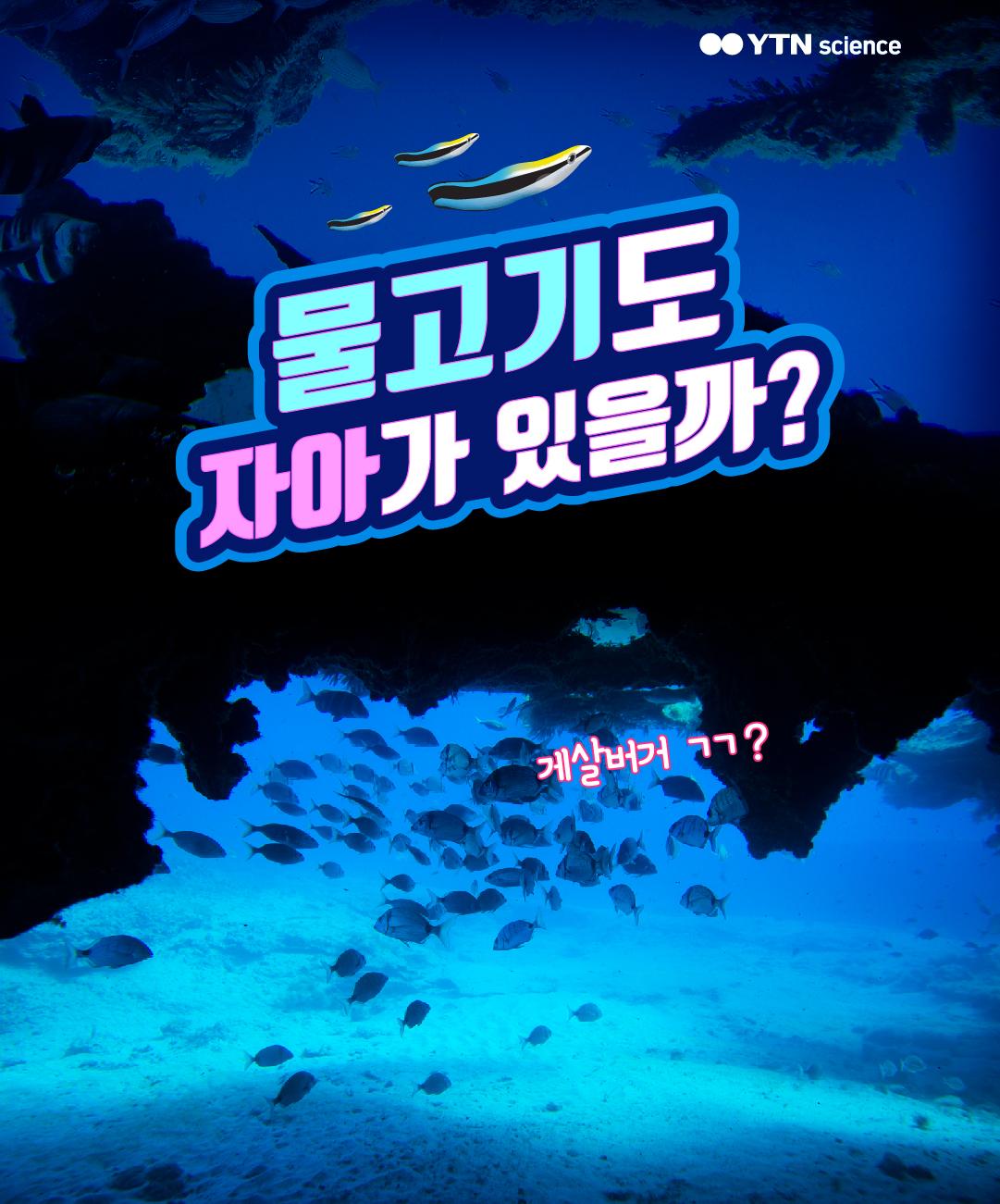 물고기도 자아가 있을까? 이미지