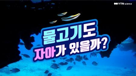 물고기도 자아가 있을까?