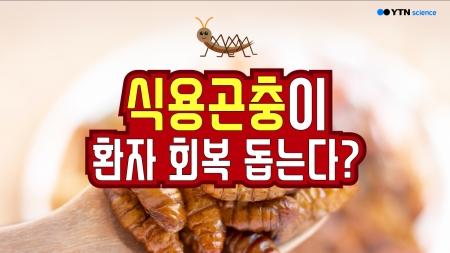 식용곤충이 환자 회복 돕는다?