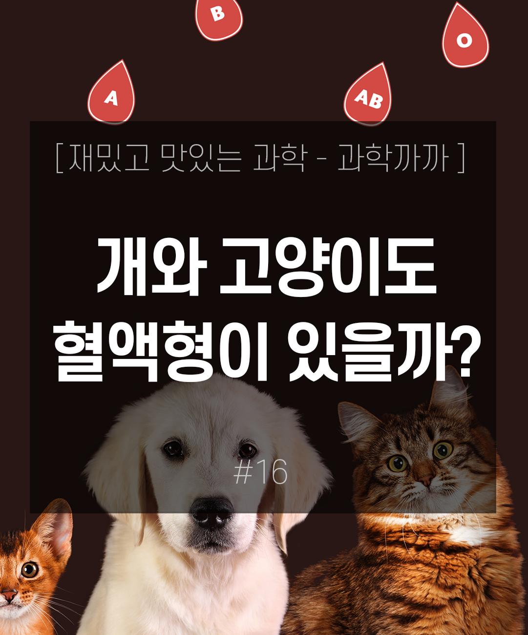 개와 고양이도 혈액형이 있을까? 이미지